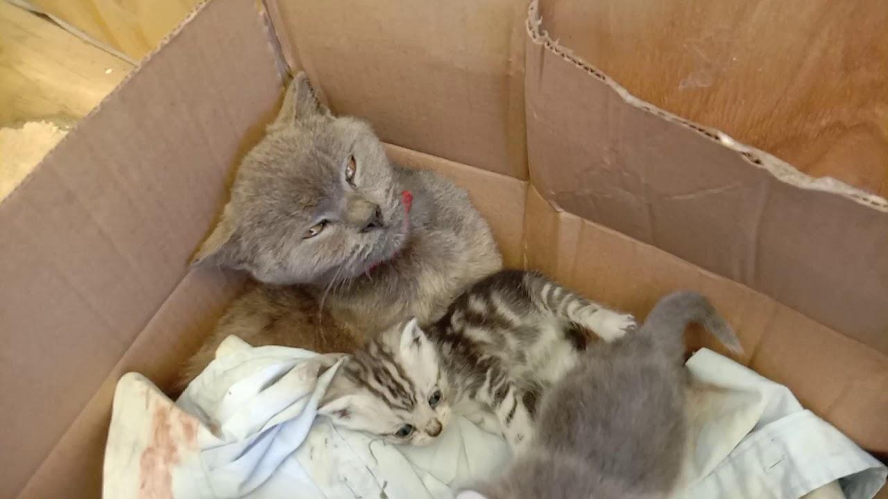 Кошка Герда родила котят. Поиски и спасение потерявшихся котят