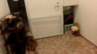 千葉県君津市へ1泊旅行。3室あるペンションが貸切に!! ノーリードで...