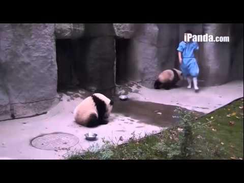 Panda Chengdu [1]17.09.14