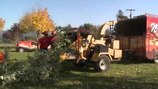 Portland Tree Removal & Complete Tree Care Services - Nw Arbor