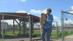 Puyallup animal shelter to shut down after financial hit from coronavirus pandemic