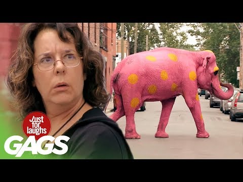 Best Wild Animals Pranks - Best of Just for Laughs Gags