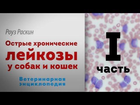 рак крови лейкемия