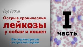 Острые хронические лейкозы у собак и кошек. 1 часть