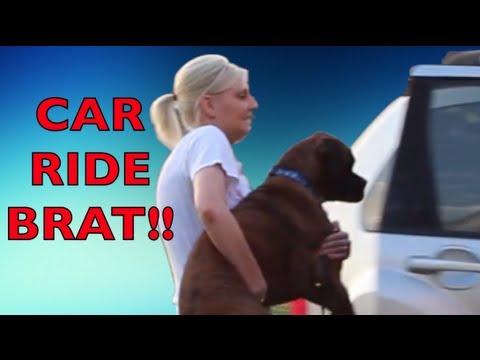 Brock the Boxer Dog : Car Ride BRAT