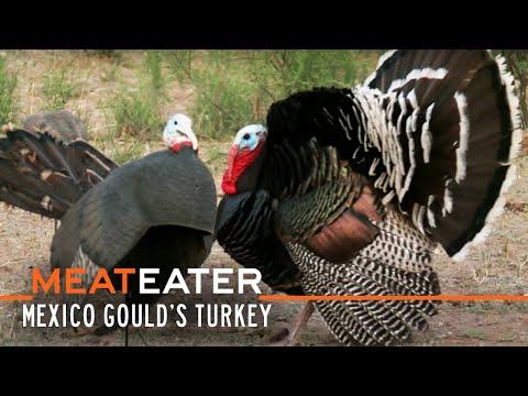 MeatEater S2-E12: Sonoran Super-Birds: Mexico Gould's Turkey