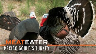 Sonoran Super-Birds: Mexico Gould's Turkey | S2E12 | MeatEater
