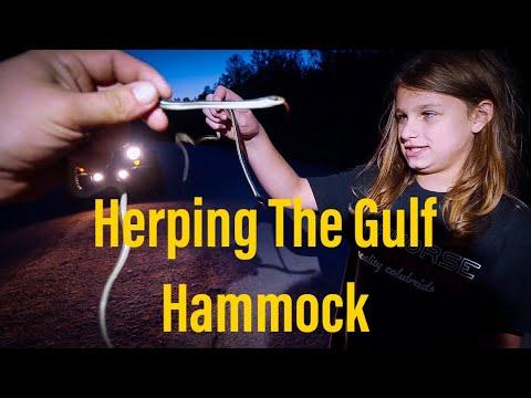 2 Days Herping The Gulf Hammock