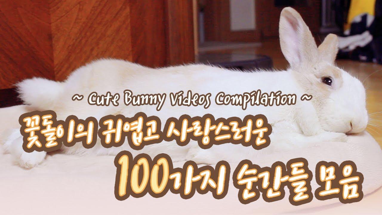 귀여운 토끼 영상 (*ꆤ.̫ꆤ*) 꽃돌이의 귀엽고 사랑스러운 100가지의 순간들 2탄