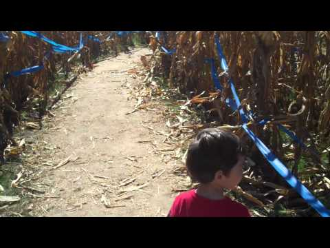 Corn Dawgs Pumpkin Patch - Corn Maze