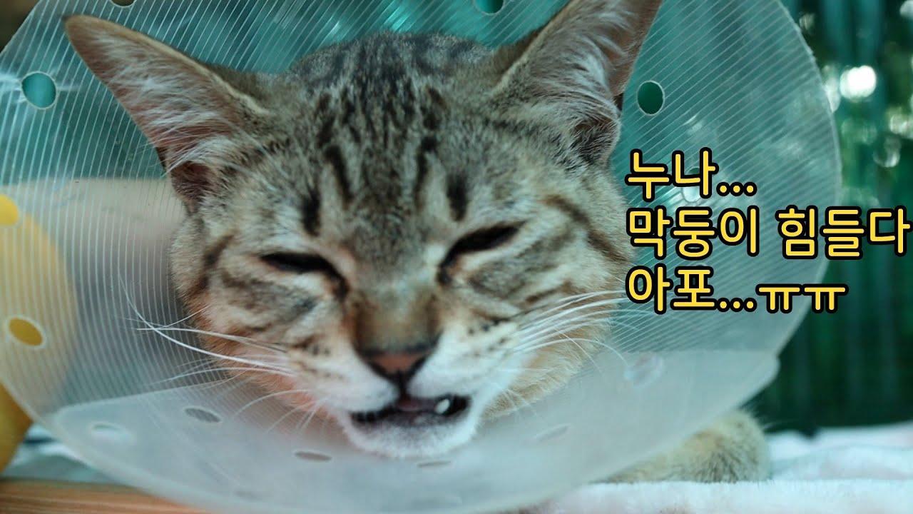 막둥이 계속 칭얼거린다ㅠㅠ( Feat. 호냥이들 목욕)