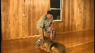How To Train Your Dog To Sit, Down And Stand