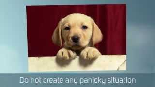 Puppy House Training Tips | Puppy Potty Training Tips |  Beagle Puppy Training Tips | Crate