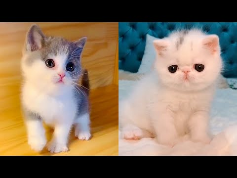 Baby Cats - Cute and Funny Cat Videos Compilation #12 | Aww Animals