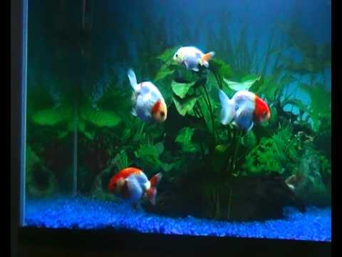 Aquarium Fish Nutrition  Fish Food Information amp Aquatic