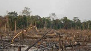 Help Save The Rainforest