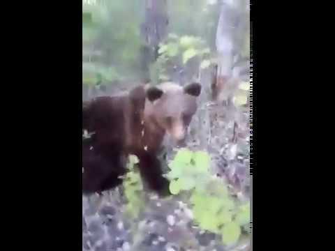 Мужчина на Камчатке подкрался к медведю и пнул его
