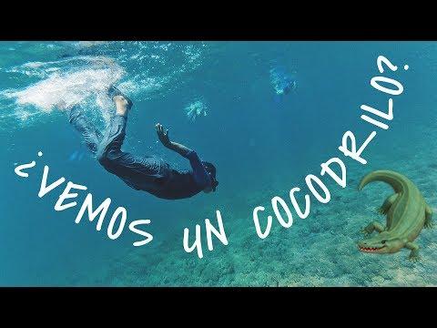 ¿quÉ-hacer-en-panamÁ?-nadando-con-el-tiburÓn-ballena-en-isla-coiba---venezolano-en-panama