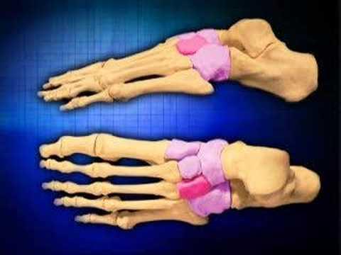 Biomechanics of the foot www.footkneepain.com.au