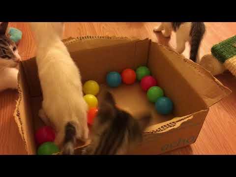 Kitten Ball Pit!