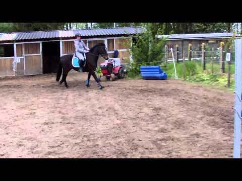 Kendy vh Migroveld Training 95-100cm