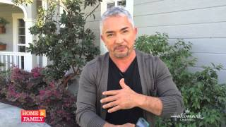 """@cesarmillan """"the Dog Whisperer"""" Answers Viewers' Questions"""