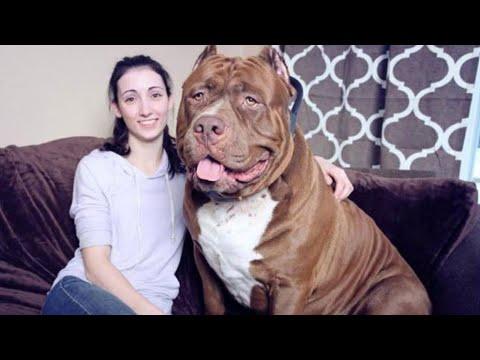🐶|-top-5-perros-mÁs-peligrosos-de-la-historia-|🐶