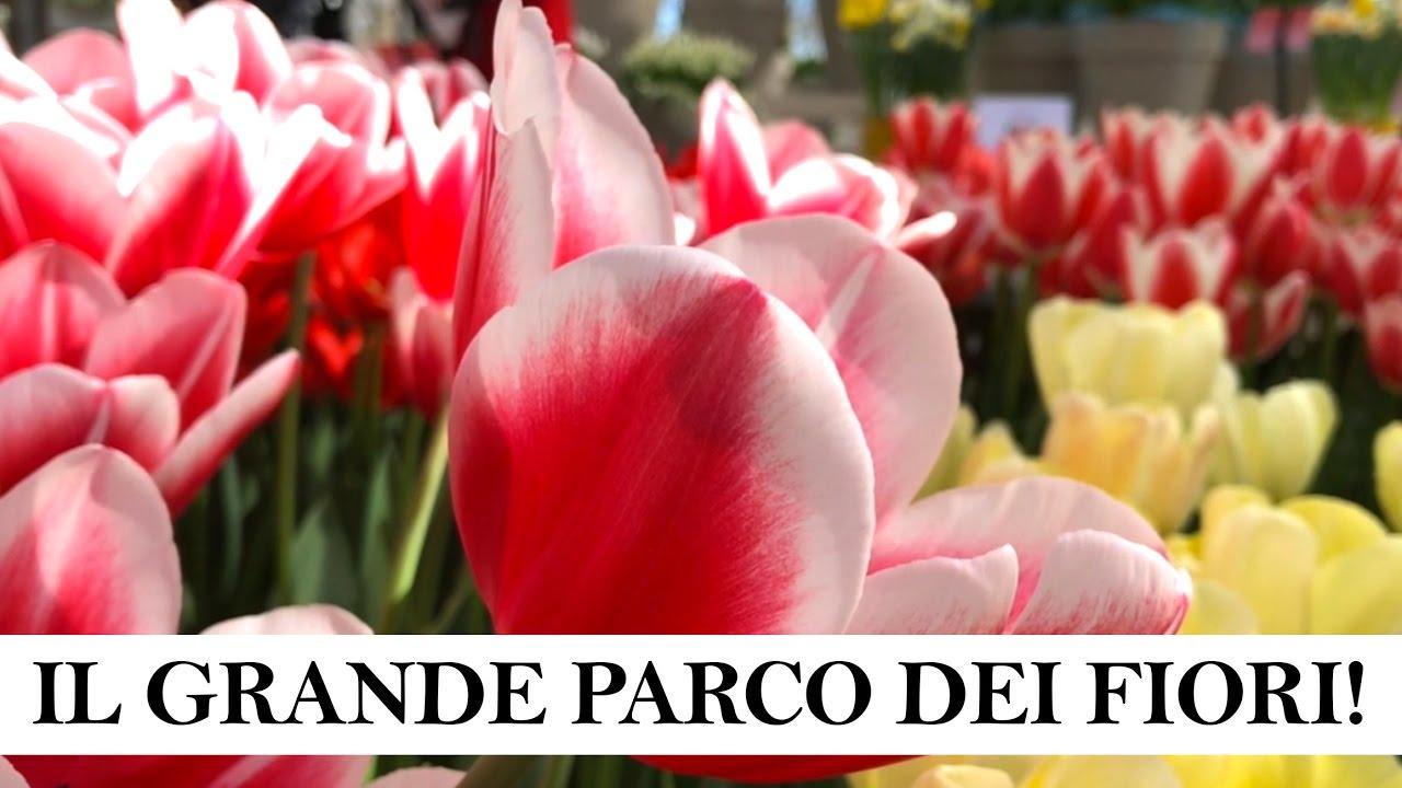 Piantare I Bulbi Di Tulipani keukenhof 2017 - tulipani!! / scopri una amsterdam insolita