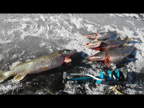 Осторожно КРОКОДИЛЫ  !!! Ловля огромных щук. На неизведанных просторах Ишима. Рыбалка с ночёвкой.
