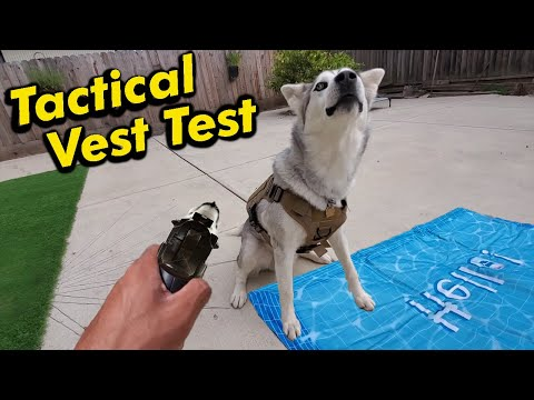 Testing A Tactical Harness On My Husky | Pet Cooling Pad Unboxing | LOCAL GIVEAWAY!!