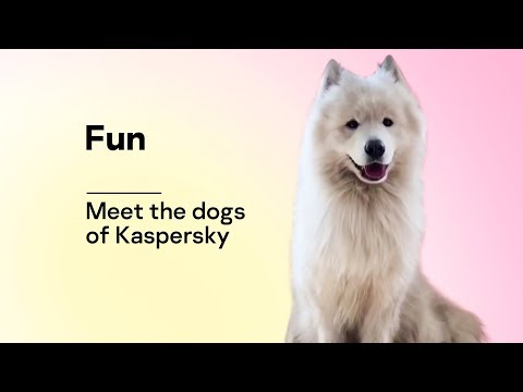 Meet the dogs of Kaspersky Lab