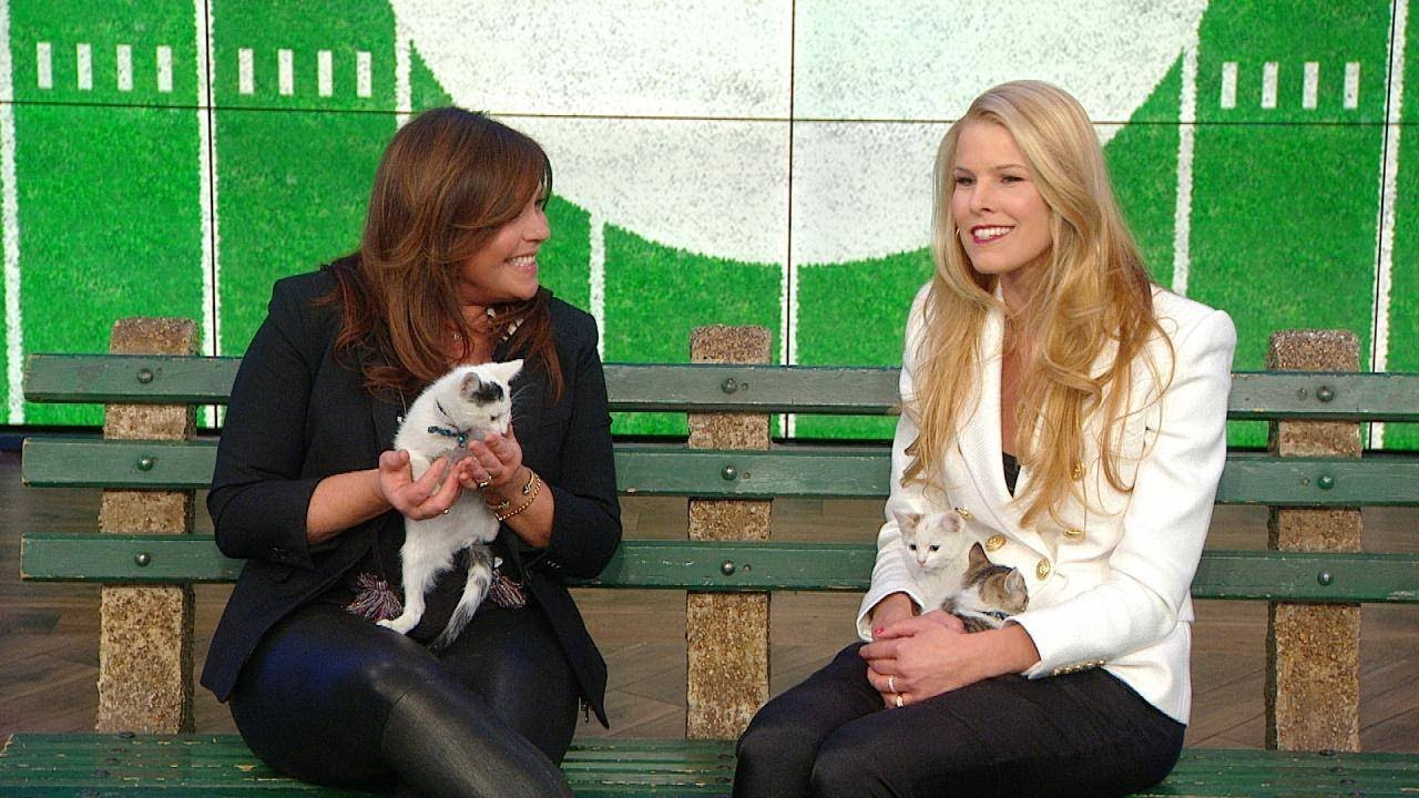 Beth Stern Teases Kitten Bowl 2019 With 3 Adorable Kitties Youtube