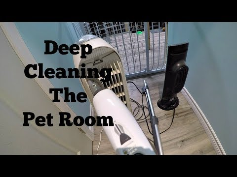 Deep Cleaning The Pet Room