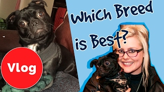 How to Choose the Right Dog Breed!