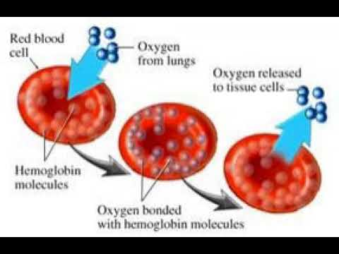 #6 Cure for athletes foot, How to build blood oxygen capacit
