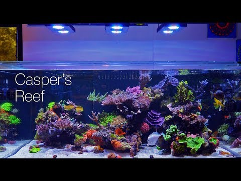 Casper's Reef @ Worldwide Corals 4K Tank Tour