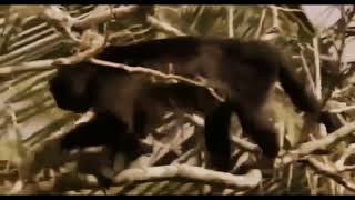 Discovery Channel Animals   Animal Planet   Jaguar Documentary  2015 HD