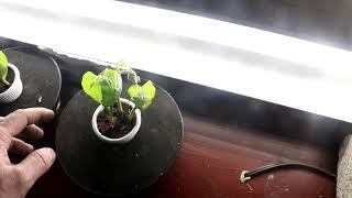 Growing Plants on A Rotating Platform