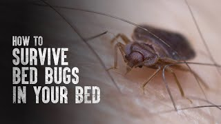 How to Survive Bed Bugs