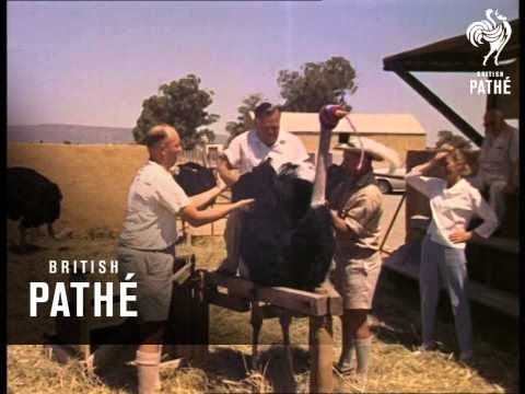 Butlin In South Africa - Unedited Material Reel 6 - 7 (1961)