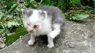 КОТЕНОК УМРЕТ, если его не лечить. Спасение котенка от смерти возможно ли?