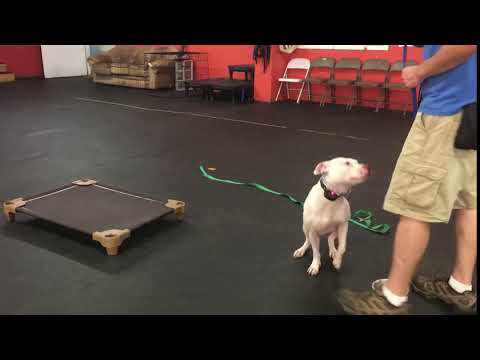 Dog Training the OUT Command | Dog Training a resource guarding dog