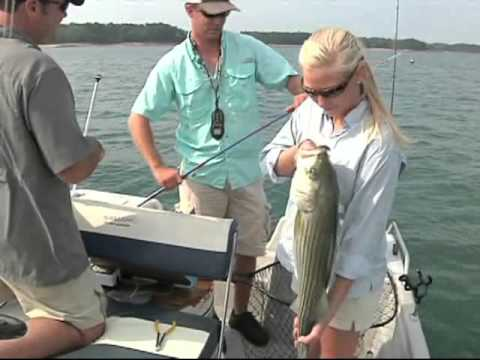 Lake Hartwell Striper Fishing