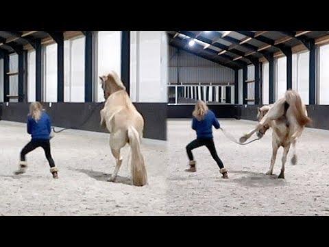 Hoe Moos van een draak in een braaf paard verandert | Weekvlog #92