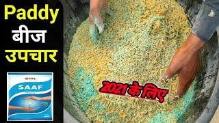 Dhaan Bij Upchar | Paddy seeds Treatment | धान का बीज शोधन | Dhaan ka seeds upchar Kaise kare