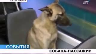 Приколы с животными до слез  Сборник приколов про животных, выпуск №29