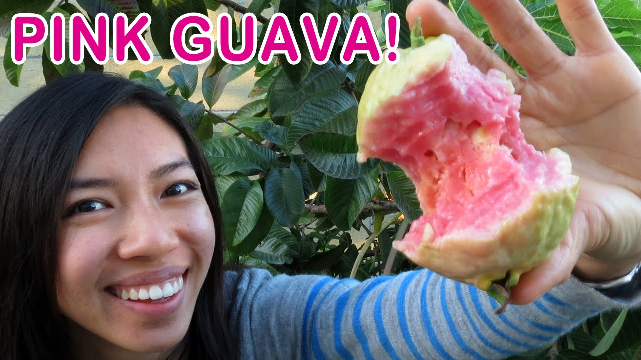 How To Grow Pink Guava
