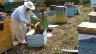 На пасеке, пчёлы-трудяги, фрагменты