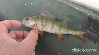 Рыбалка на карпА Озеро Калды 13 08 2021