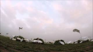 Snow Goose Hunting Conservation Season 2015